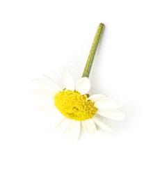Detalle flor Apícola del Bierzo